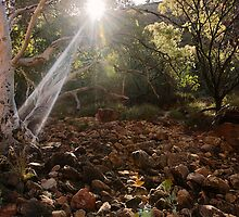 Ghostly Rays by Trudi Skinn