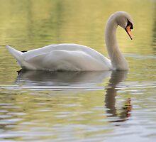 Sleepy Swan by Theresa Selley