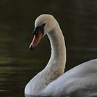 Swan portrait. by Theresa Selley
