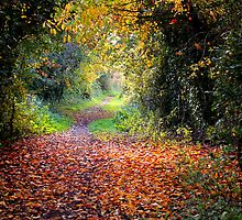 The Old Railway Line by Neville Hawkins