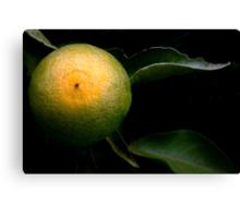 A Tangerine Grows Canvas Print