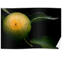 A Tangerine Grows Poster