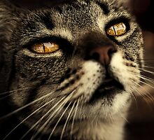 golden eyes by Ingz