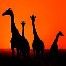 Sunset in Africa by Raphael Lopez