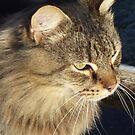 aritocat by gaylene goodsell