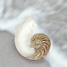 The Nautilus Shell by CarlyMarie