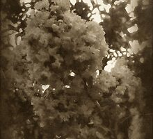 Crape Myrtle Antiqued by Christopher Johnson
