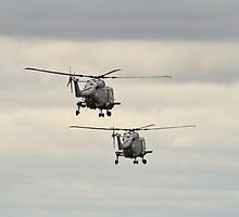 Navy Lynx pair by Stephen Kane