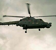 Navy Lynx  by Stephen Kane