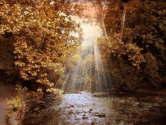 Autumn River Light by Jessica Jenney