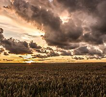 Sunset over the meadow by Paul Madden