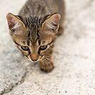 Cat puppy  by jordygraph