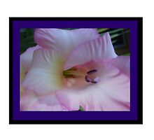 Pink Gladiola with purple border by ItsAnOddWorld
