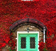 A wall is a garden by Hercules Milas