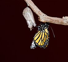 Monarch moving out by Eivor Kuchta