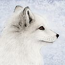 Polar Fox Profile by Mariya Olshevska