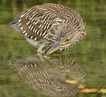 Timid reflection by Heather King