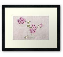 Phlox, Perfume And Lace  Framed Print