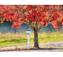 Blazing Bloody Red Dogwood By White Mailbox Photographic Print