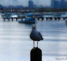 Loan Seagull by ezycardz