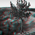 Bryce Canyon Tree 3D by Dan Owens