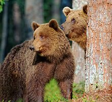 Two brown bears, Alaska by leksele