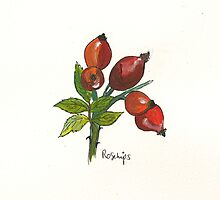 Rosehips by Sam Burchell
