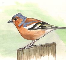 Male Chaffinch by Sam Burchell
