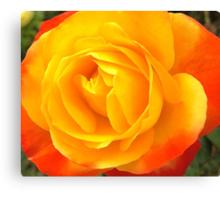Yellow & Burnt Orange Rose Canvas Print