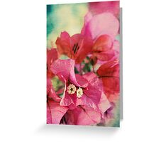 Bougainvillea at Sunset Greeting Card