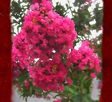 Crape Myrtle Blank P5F0 by Christopher Johnson