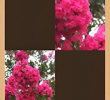 Crape Myrtle Blank Q3F0 by Christopher Johnson