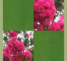 Crape Myrtle Blank Q5F0 by Christopher Johnson