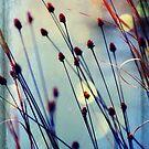 Carefree by Jonicool
