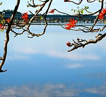 an early spring morning down along the river. by Evelyn Bach