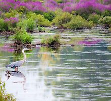 Heron in the Swamp by picsbytabitha