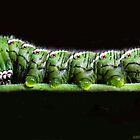 Katy Katerpillar Ate All The Leaves! by heatherfriedman