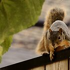 Squirrel on the Fence by CORA D. MITCHELL
