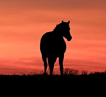 Horse at Sunset  Buckinghamshire  UK by James  Key
