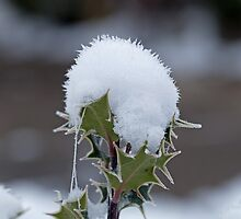Holly Snow Cone by Sue Robinson