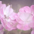 Whispering Wild Roses by JennyRainbow