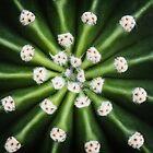 Cactus by brandiejenkins