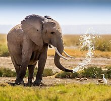 A Welcome Cooler! by Steve Langton