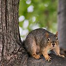A little Squirrelly by Keala