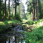 Waterfall at Cragside by Jacqueline Turton