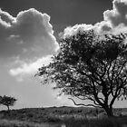 Two Tree's by Heidi Stewart