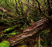 Cradle Mountain National Park by Imi Koetz