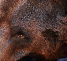 A Bears Life Sticker