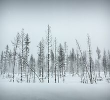 Oregon Winter Trees by JocelynVodnik