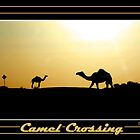 Camel Crossing by Dave  Grubb